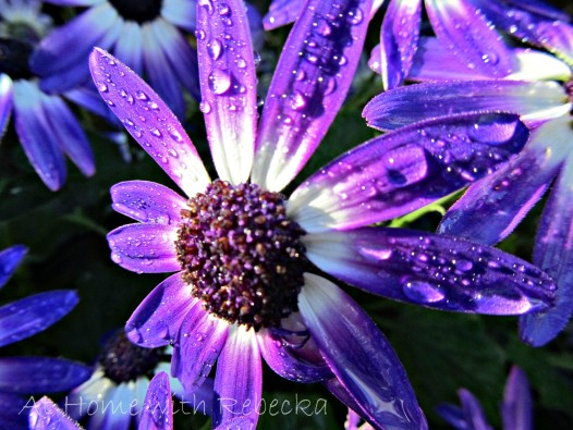 purpleblooms