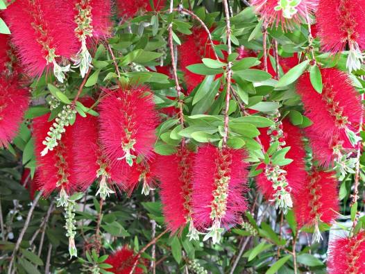 California Plants
