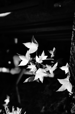 bw-fn-1 Garden Leaves