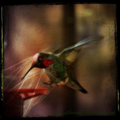 HummingbirdColor