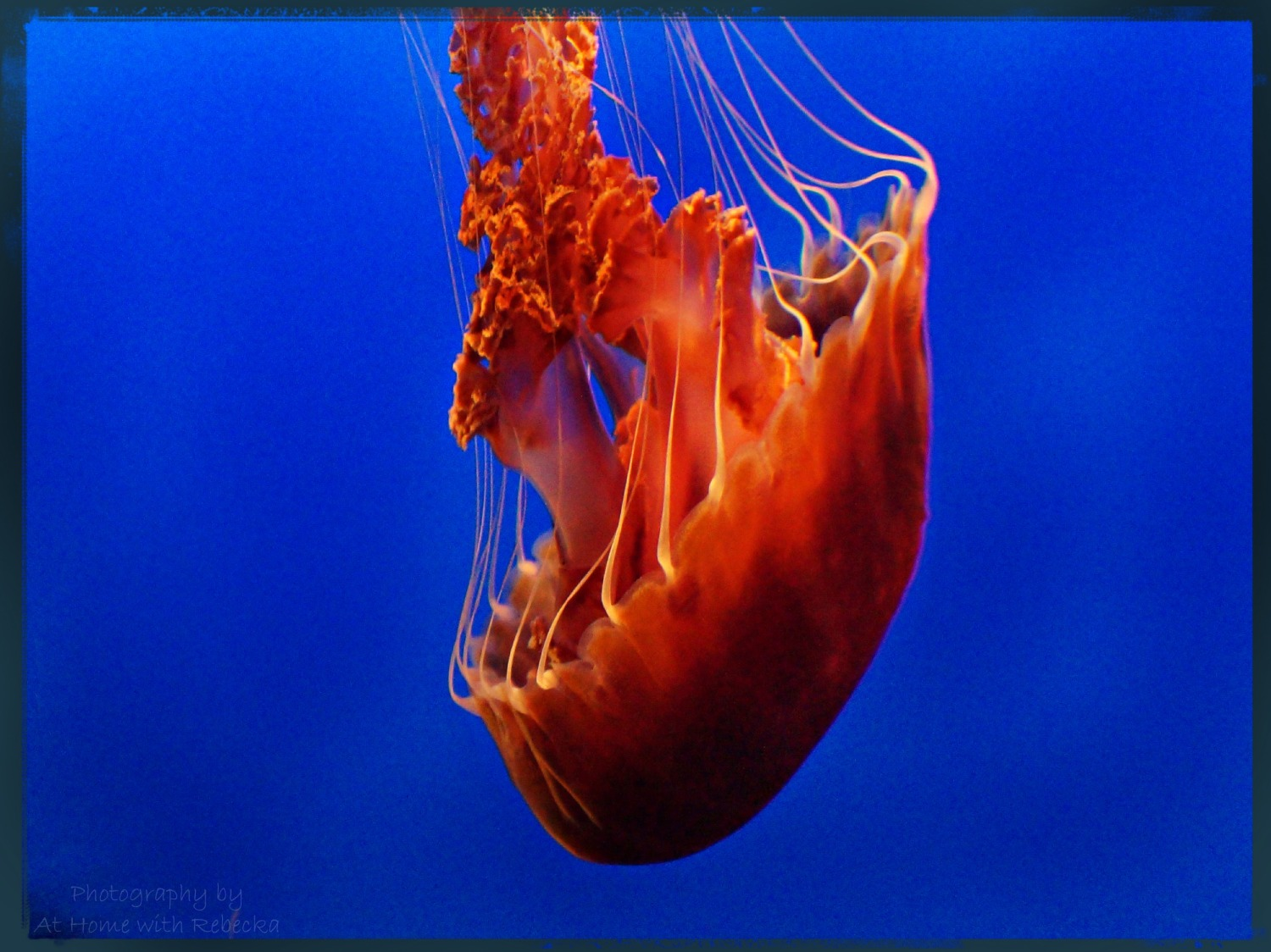 Indonesian Flame Jelly